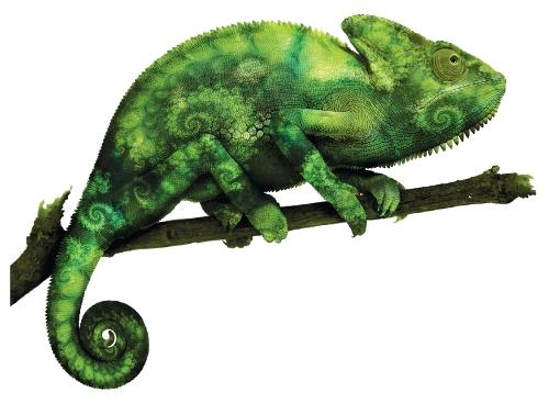 suse_chameleon_500.jpg